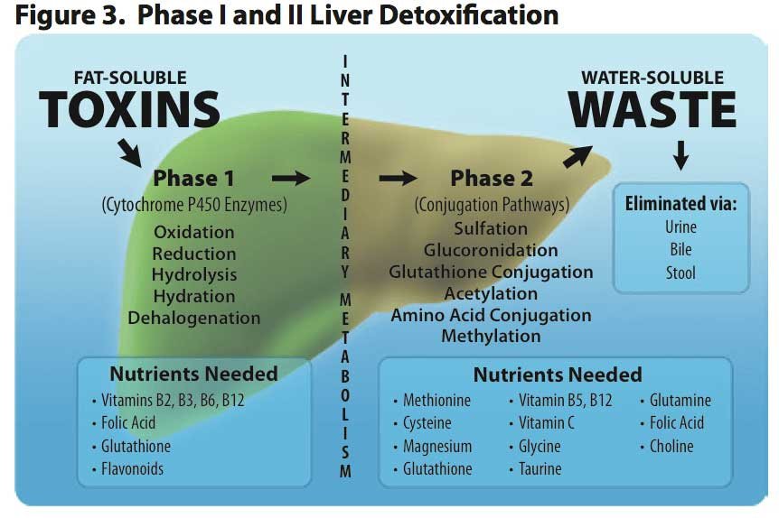 Phase I and II Liver Detoxification