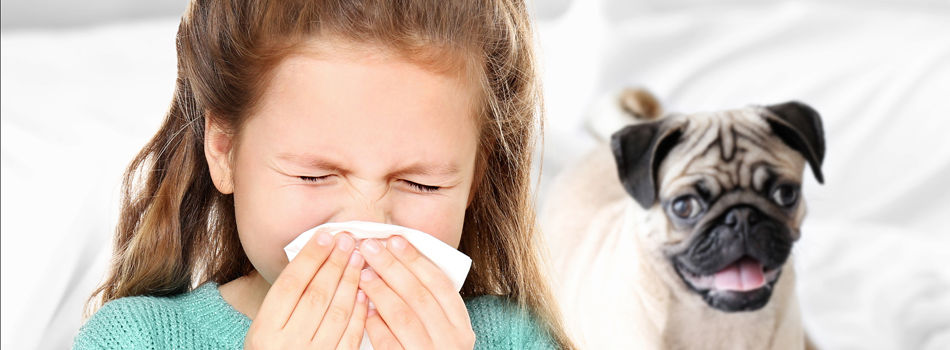 sublingual immunotherapy for dog allergies